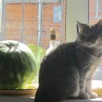 Сибирский колдун: котяра в доме