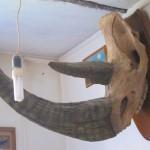 Палеонтология: череп шерстистого носорога