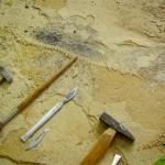Палеонтология: рабочая зона палеонтолога