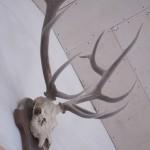 Палеонтология: олень ледникового периода